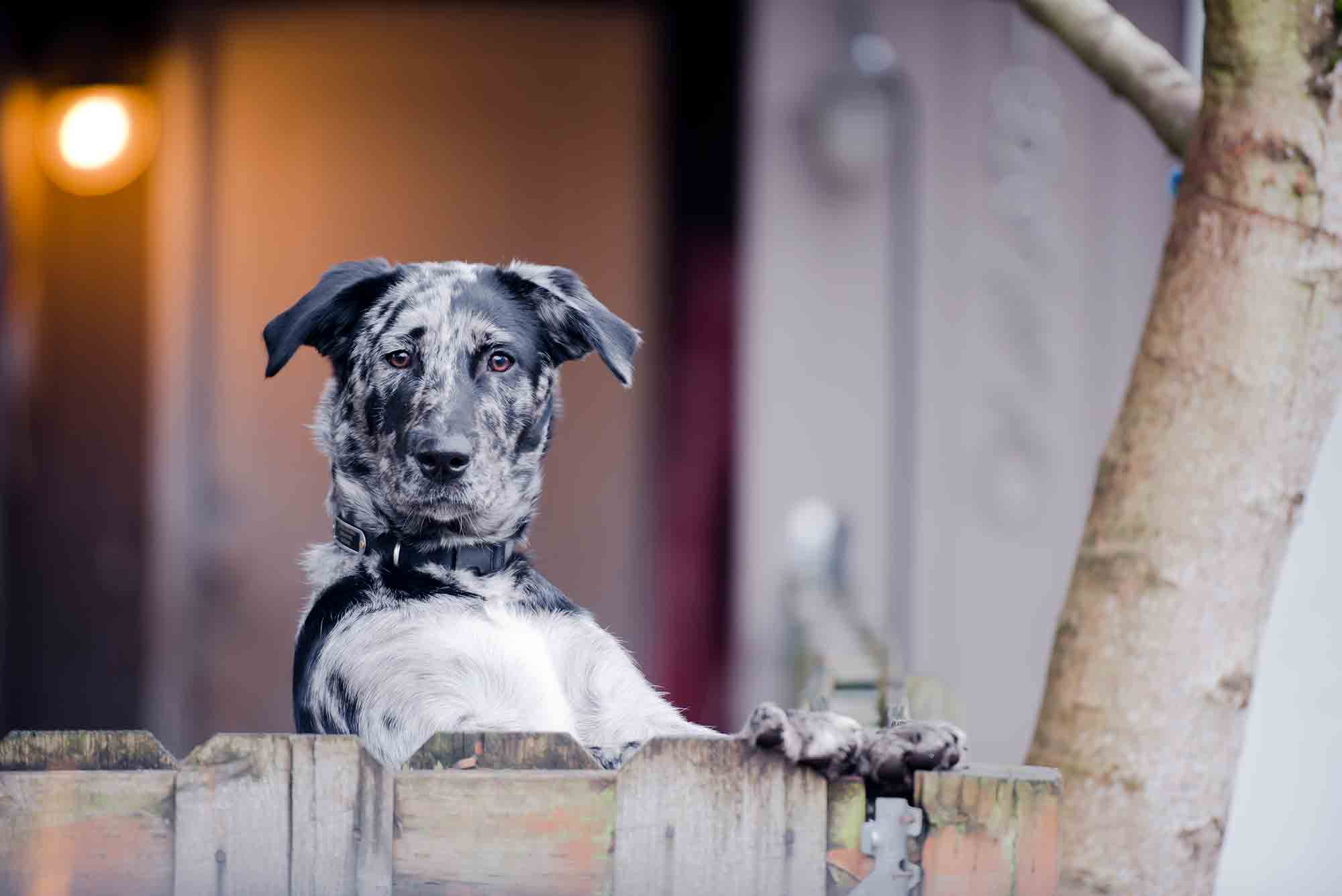 veterinary blog