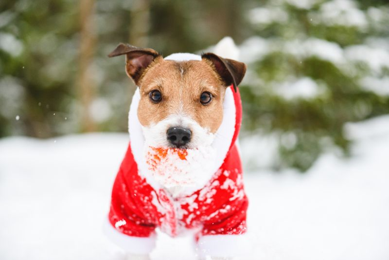 dog wearing sweater in snow