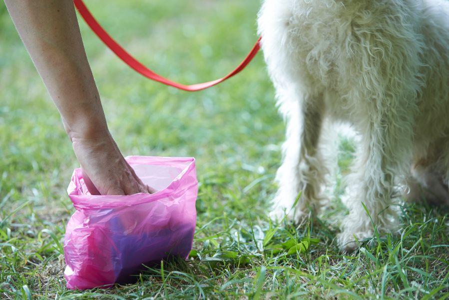 pet waste pickup