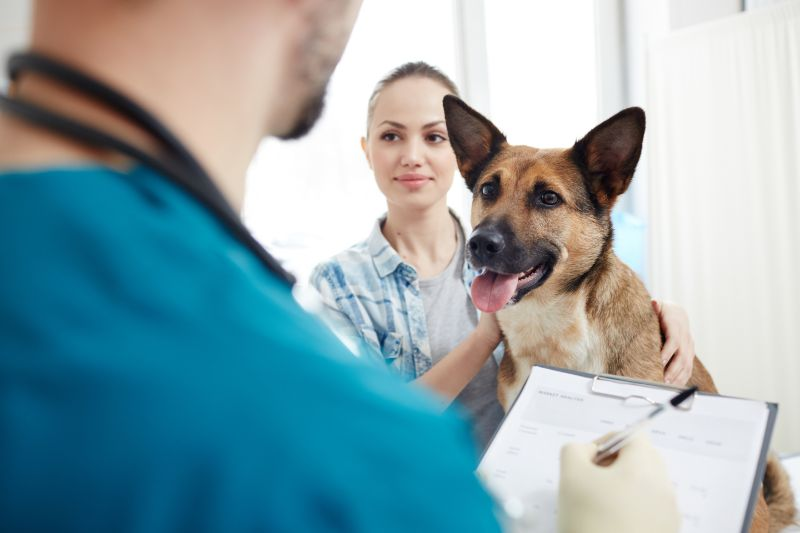 dog with owner at vet