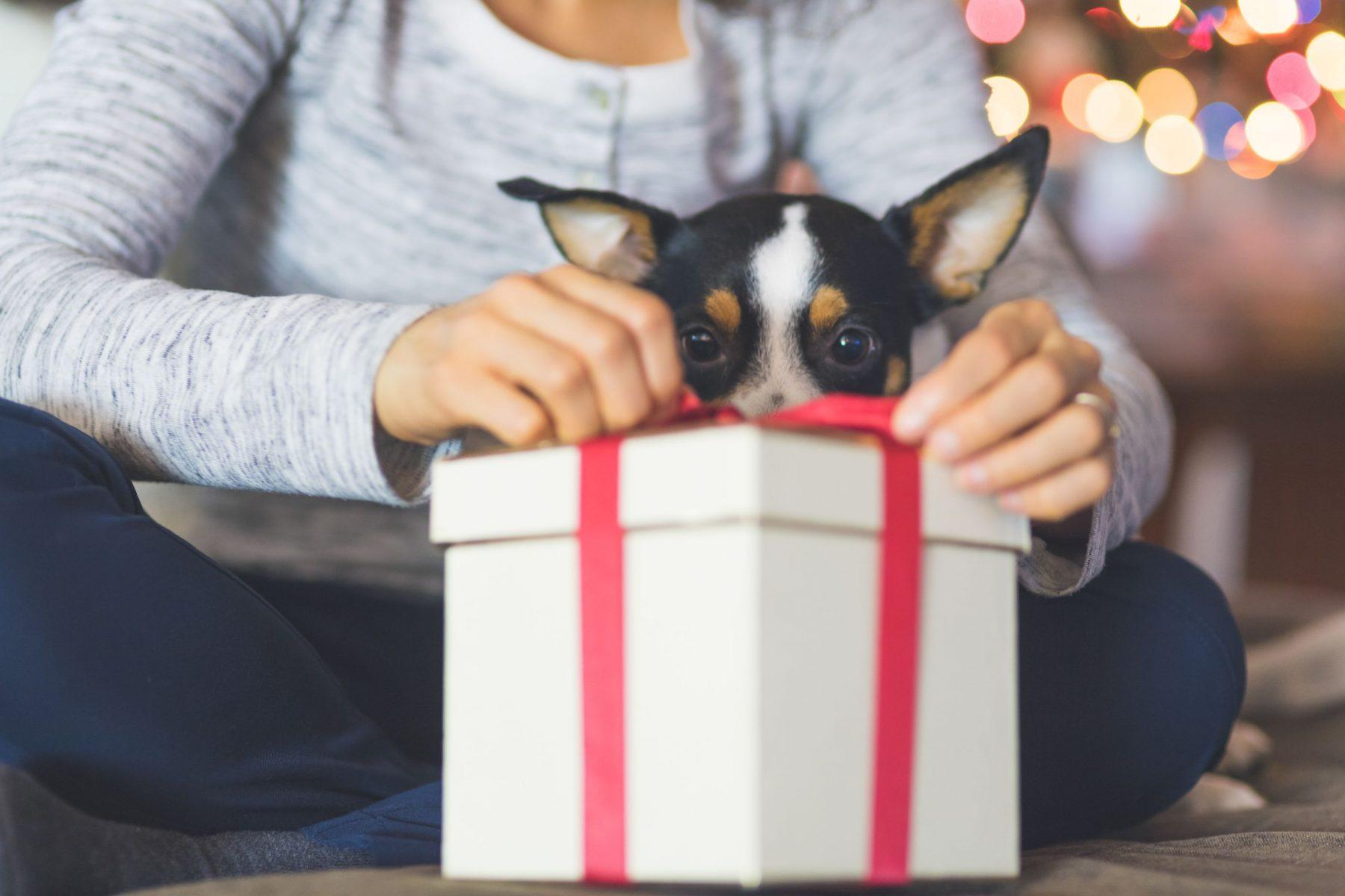 dog next to gift
