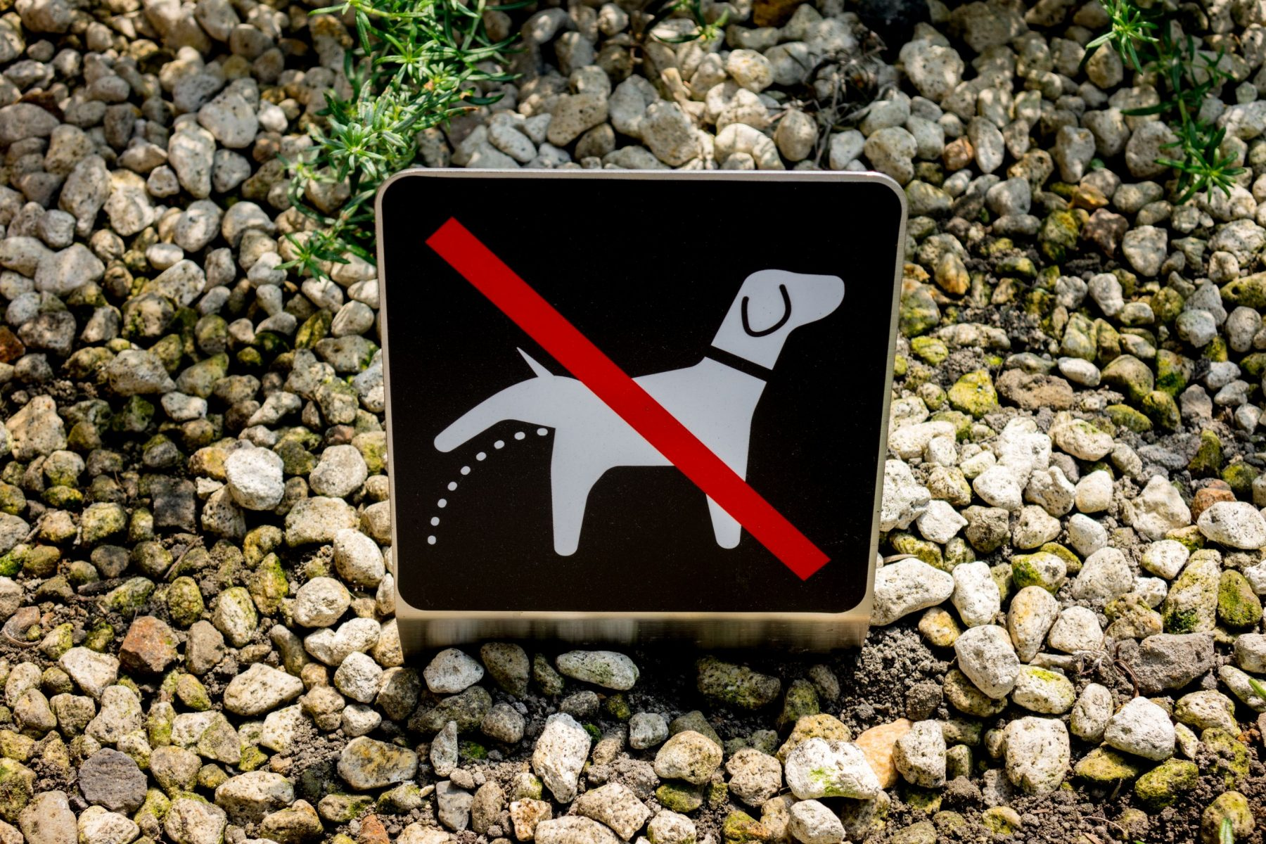 No urinating dogs sign.