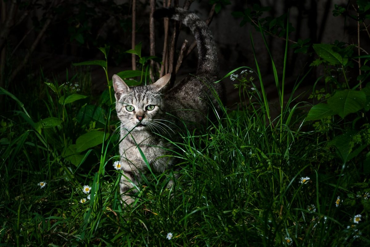 Cat outside at night.