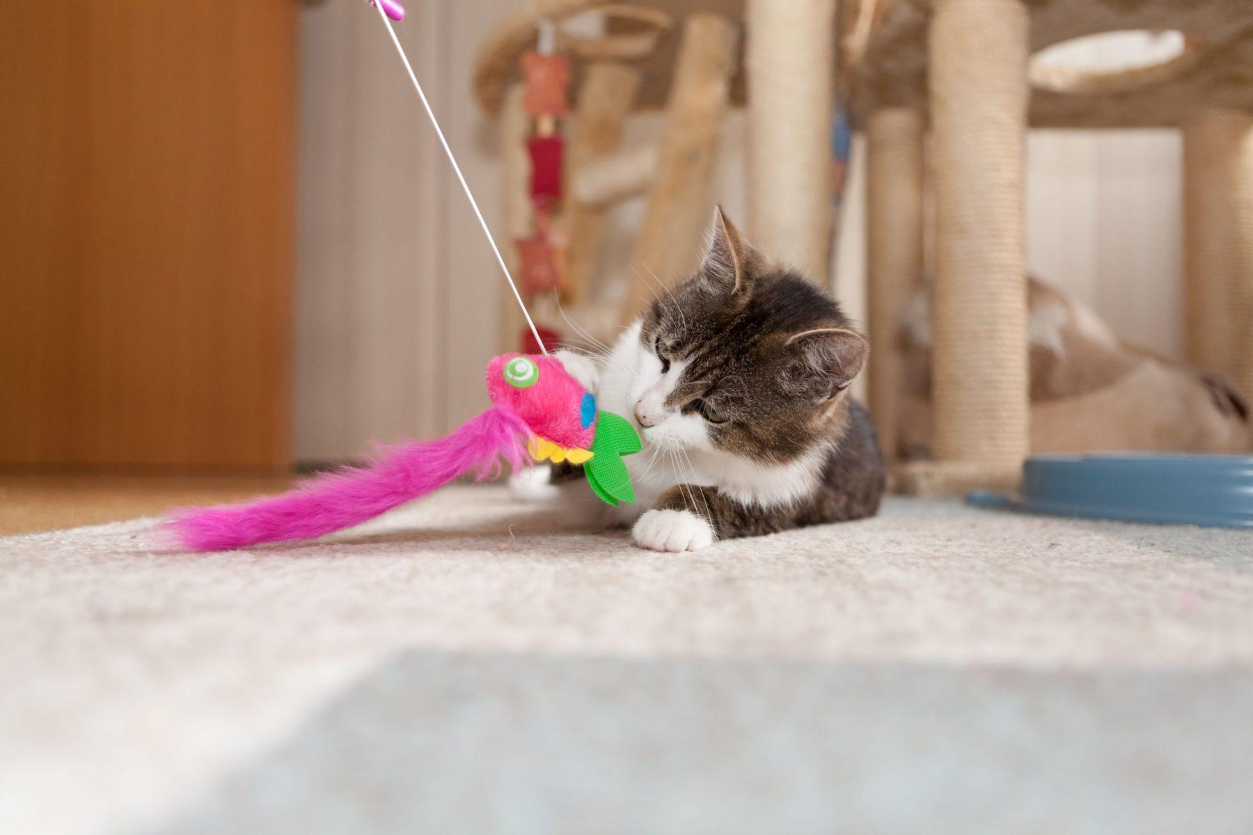 Cat toys.
